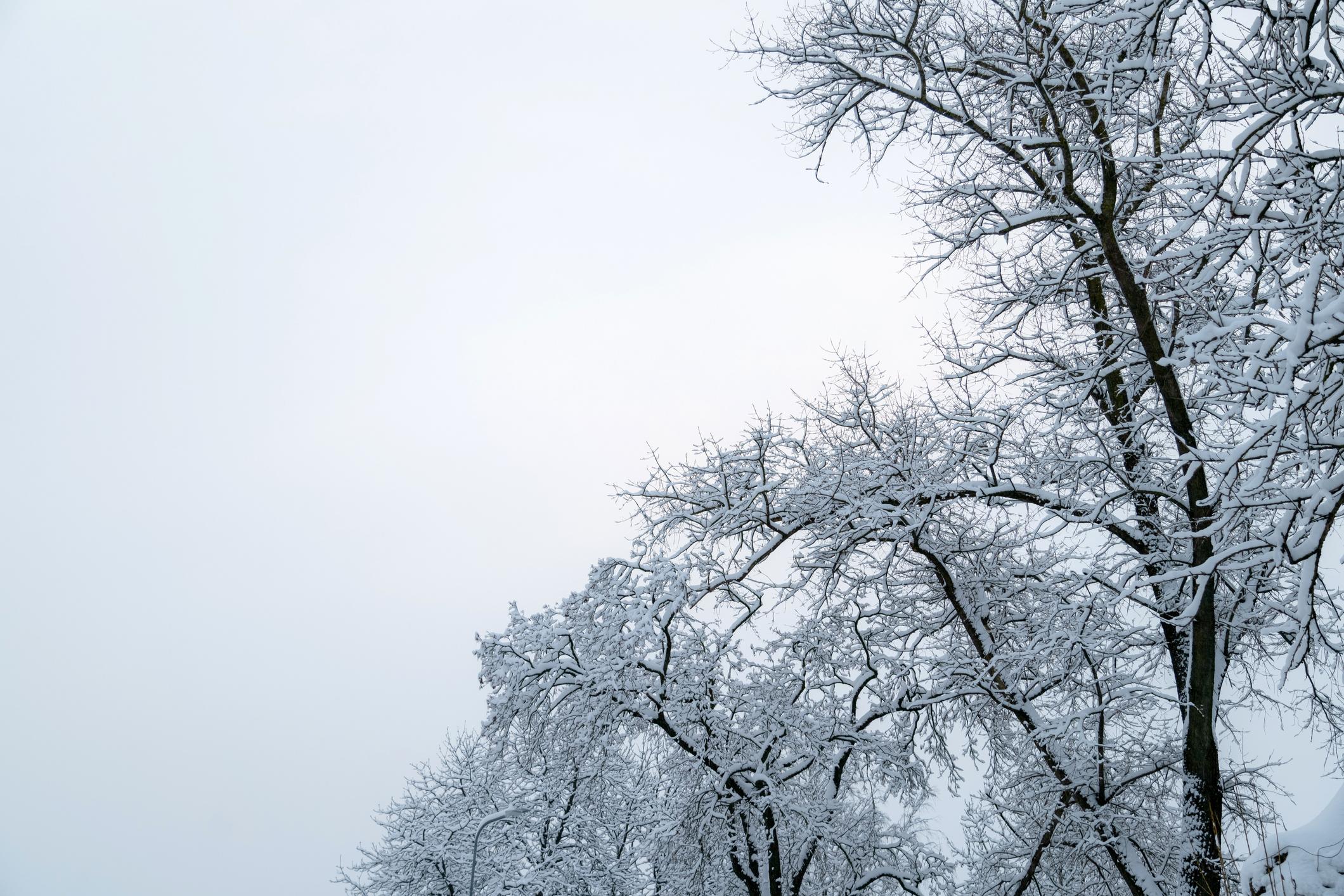 Winter Storm Drive
